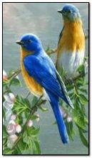 птахів