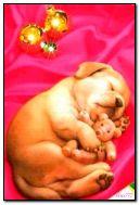 the sleeping puppy