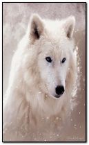 Śnieżny wilk