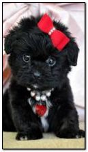 Cute puppy with red bow 360?640