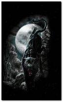Moonlight panther