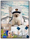 Kitten on the sea