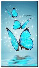 Голубые бабочки