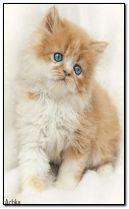 animasi kucing