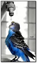 parrot and drop water