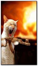 kucing + marah