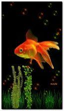 pez de colores