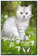 Kitten snowdrops