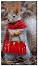 miss squirrel