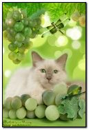 cat with grapes