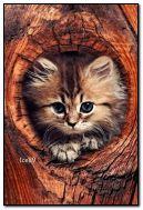 Kucing comel di dalam pokok