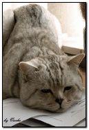 Mèo buồn