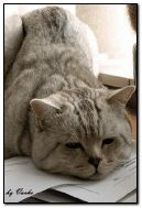 Kucing bosan