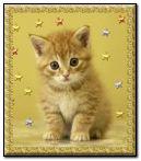 chú mèo dễ thương