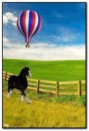 الحصان متحرك