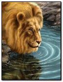 king lion.