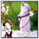 cute kitty at spring day.