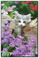 Kitten in a thicket of flowers and butterflies!