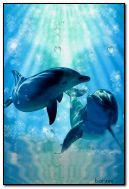 الدلافين السعيدة