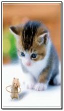 Hamester y gato