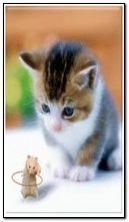 Hamester & cat