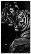 प्यार में बाघ