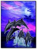 delfini hc 01 240