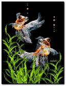 Sparkling fish in the aquarium