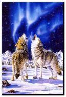 भेड़ियों