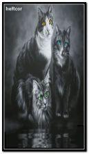 cats 360x640 b