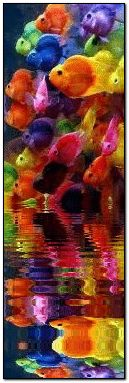 colorful fish reflection