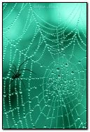 spider and the fly on spider web
