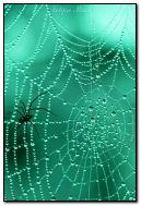 pająk i mucha na pajęczej sieci
