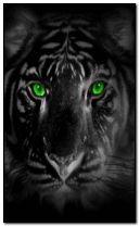 ตาสีเขียวเสือ