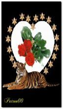 tiger tiger DSO4