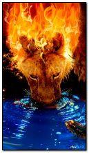 Fiery lioness