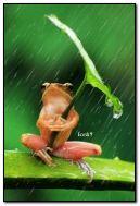 Hey, il pleut, non?