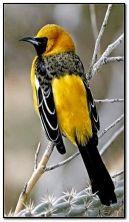 पक्षियों