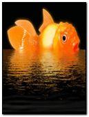 Cute goldfish
