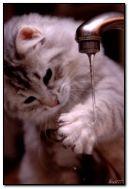 playing kitten
