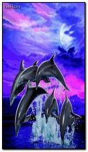 dolphins hc 01 360