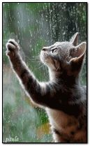 cat and rain