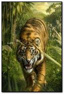 Chasse au tigre