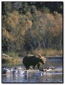 The Bear:::