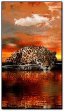 Leopard on the water