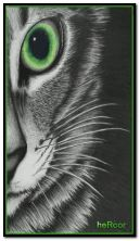 gato hc