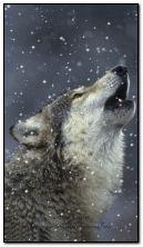 Tuyết rơi sói