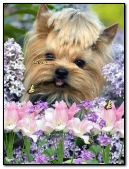 Glamorous dog with flowers and butterflies