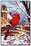 Hermosas aves en invierno