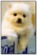 gentle puppy
